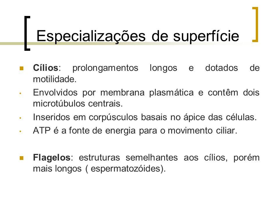 Especializações de superfície Cílios: prolongamentos longos e dotados de motilidade. Envolvidos por membrana plasmática e contêm dois microtúbulos cen