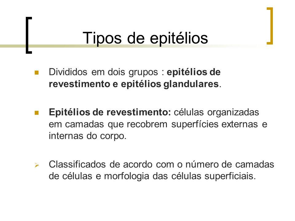 Tipos de epitélios Divididos em dois grupos : epitélios de revestimento e epitélios glandulares. Epitélios de revestimento: células organizadas em cam