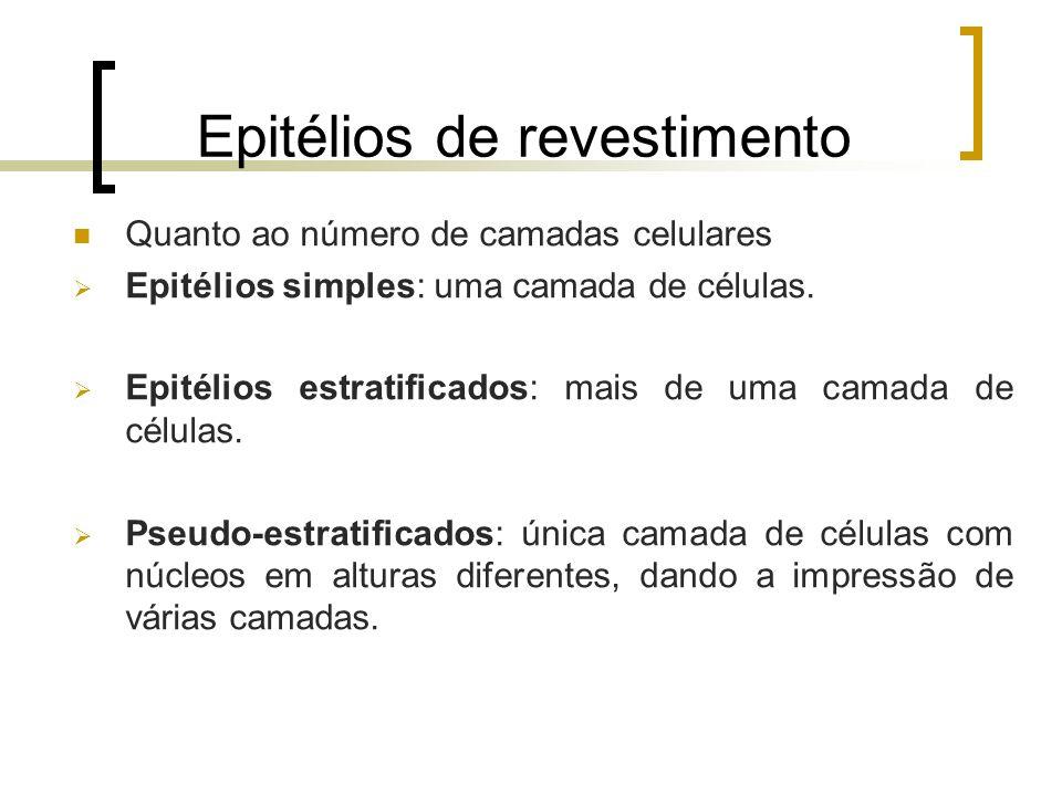 Epitélios de revestimento Quanto ao número de camadas celulares Epitélios simples: uma camada de células. Epitélios estratificados: mais de uma camada
