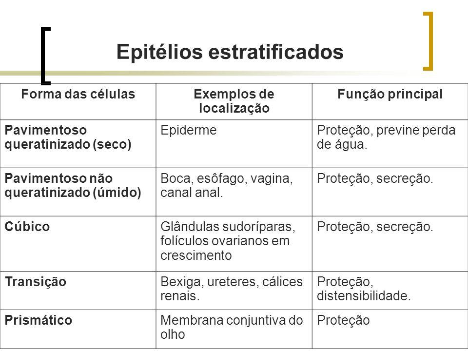 Forma das célulasExemplos de localização Função principal Pavimentoso queratinizado (seco) EpidermeProteção, previne perda de água. Pavimentoso não qu