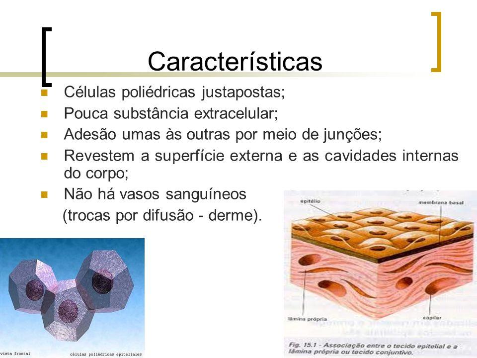 Características Células poliédricas justapostas; Pouca substância extracelular; Adesão umas às outras por meio de junções; Revestem a superfície exter