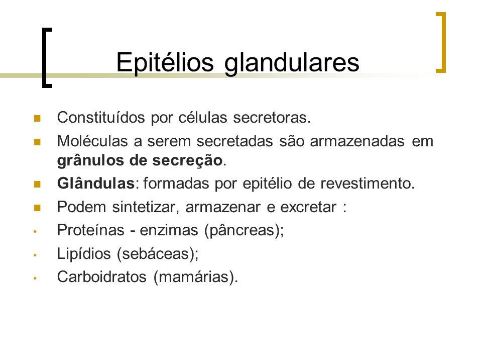 Epitélios glandulares Constituídos por células secretoras. Moléculas a serem secretadas são armazenadas em grânulos de secreção. Glândulas: formadas p