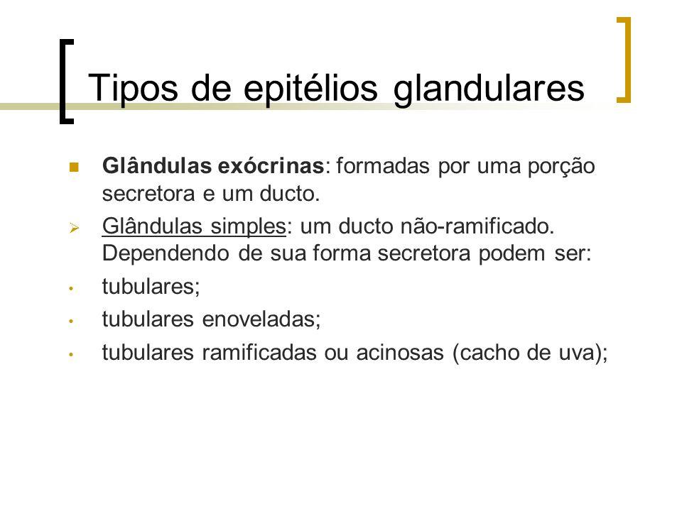 Tipos de epitélios glandulares Glândulas exócrinas: formadas por uma porção secretora e um ducto. Glândulas simples: um ducto não-ramificado. Dependen