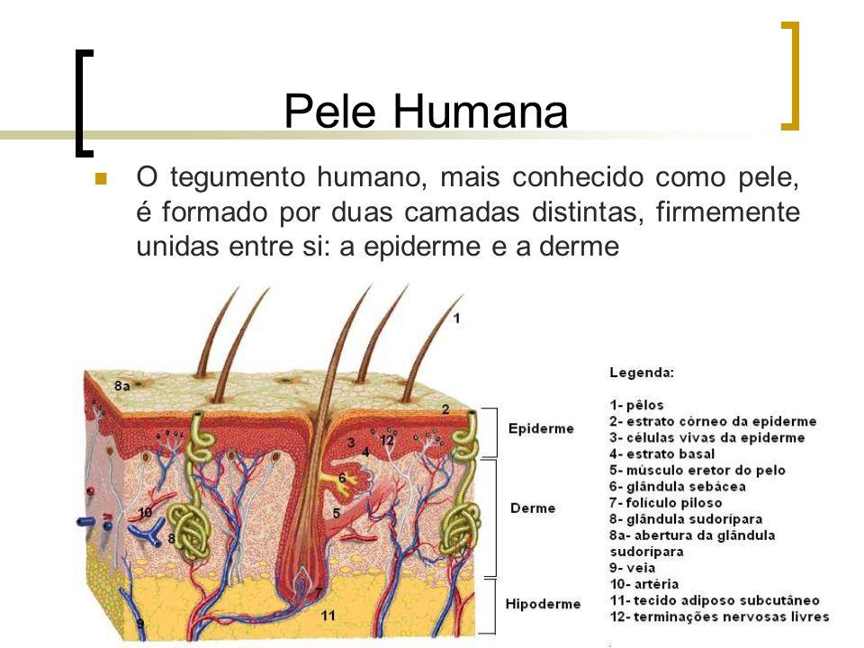 Pele Humana O tegumento humano, mais conhecido como pele, é formado por duas camadas distintas, firmemente unidas entre si: a epiderme e a derme