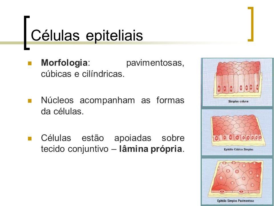 Células epiteliais Morfologia: pavimentosas, cúbicas e cilíndricas. Núcleos acompanham as formas da células. Células estão apoiadas sobre tecido conju