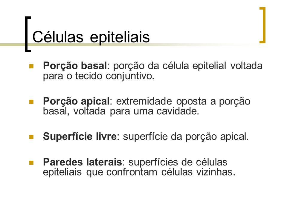 Células epiteliais Porção basal: porção da célula epitelial voltada para o tecido conjuntivo. Porção apical: extremidade oposta a porção basal, voltad