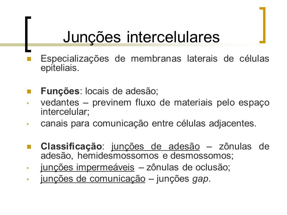 Junções intercelulares Especializações de membranas laterais de células epiteliais. Funções: locais de adesão; vedantes – previnem fluxo de materiais