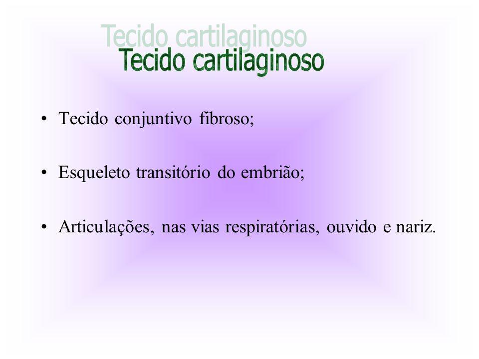 Tecido conjuntivo fibroso; Esqueleto transitório do embrião; Articulações, nas vias respiratórias, ouvido e nariz.