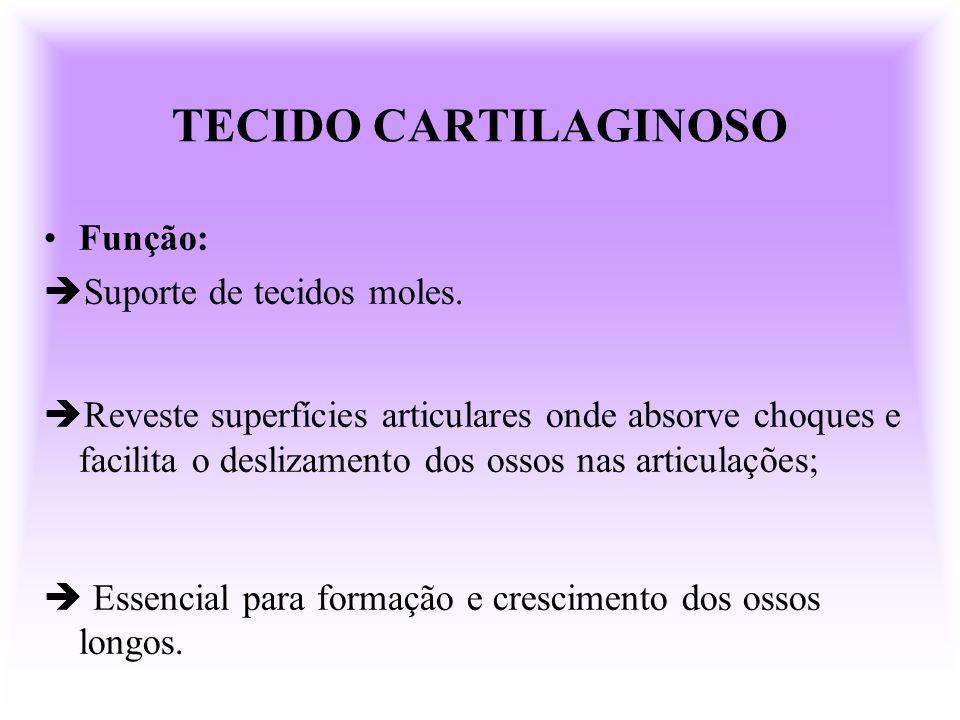 TECIDO CARTILAGINOSO Função: Suporte de tecidos moles. Reveste superfícies articulares onde absorve choques e facilita o deslizamento dos ossos nas ar