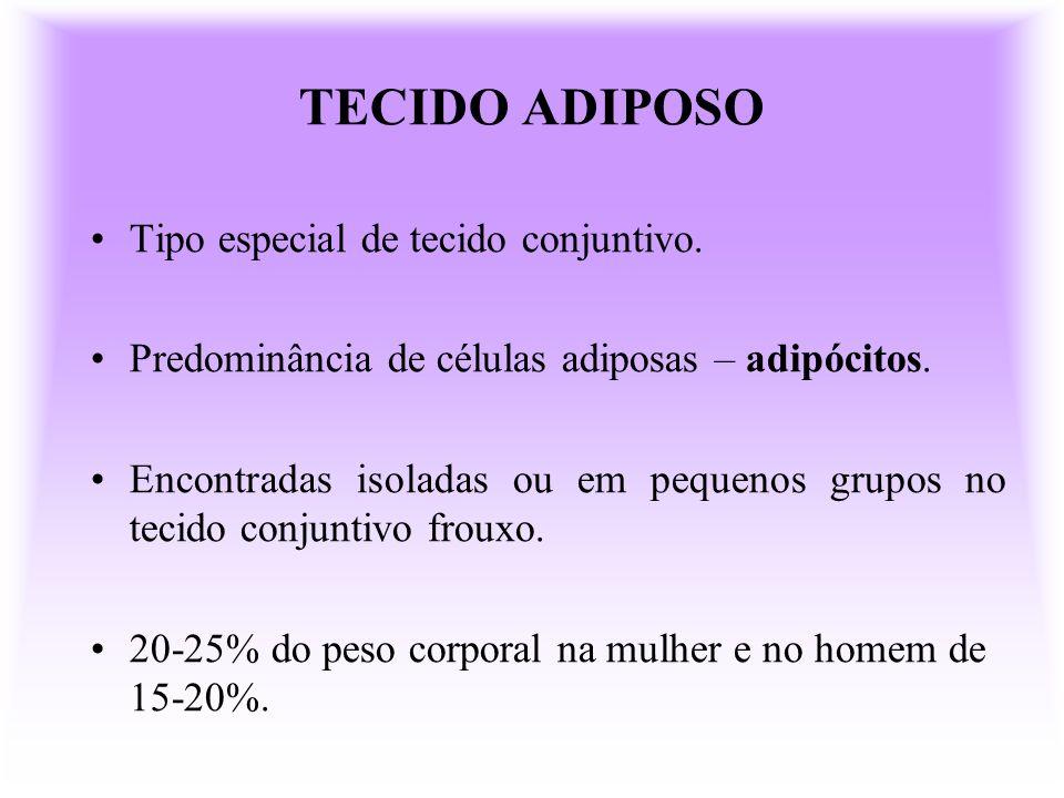 TECIDO ADIPOSO PARDO OU MULTILOCULAR Cor característica (vascularização, mitocôndrias) Localização no recém- nascido.