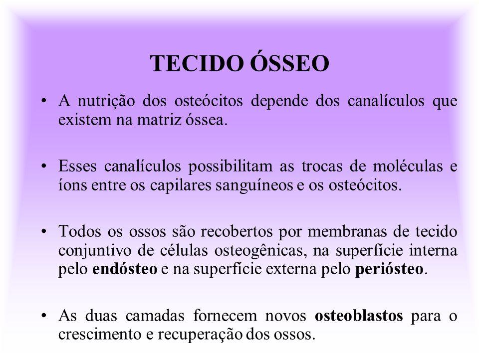 TECIDO ÓSSEO A nutrição dos osteócitos depende dos canalículos que existem na matriz óssea. Esses canalículos possibilitam as trocas de moléculas e ío