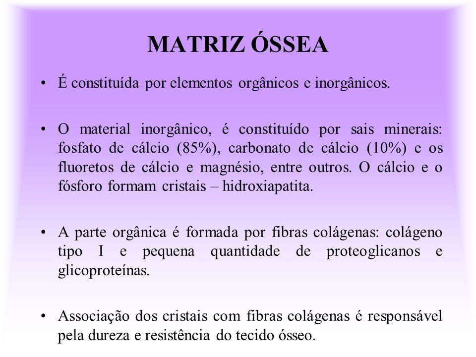 MATRIZ ÓSSEA É constituída por elementos orgânicos e inorgânicos. O material inorgânico, é constituído por sais minerais: fosfato de cálcio (85%), car