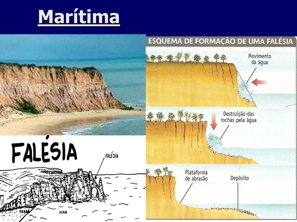 Marítima Restinga: paralelo a costa Recife: matéria orgânica