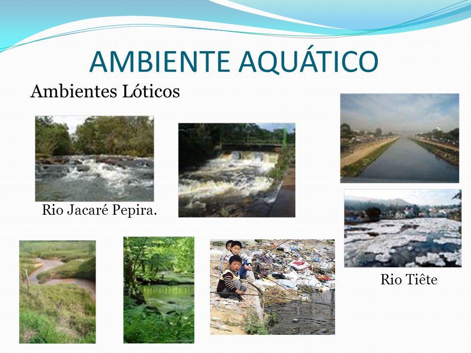 Rio Jacaré Pepira. Rio Tiête AMBIENTE AQUÁTICO Ambientes Lóticos