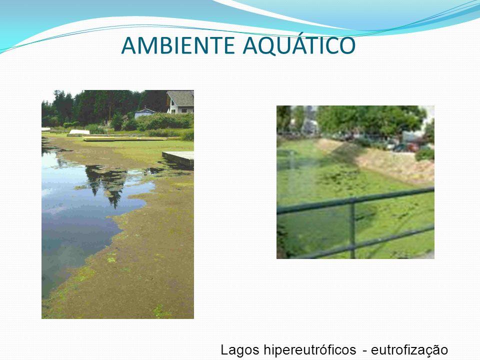 Lagoshipereutróficos-eutrofização AMBIENTE AQUÁTICO