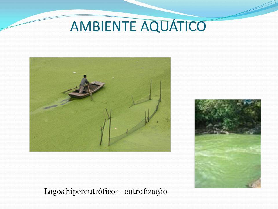 Lagos hipereutróficos - eutrofização