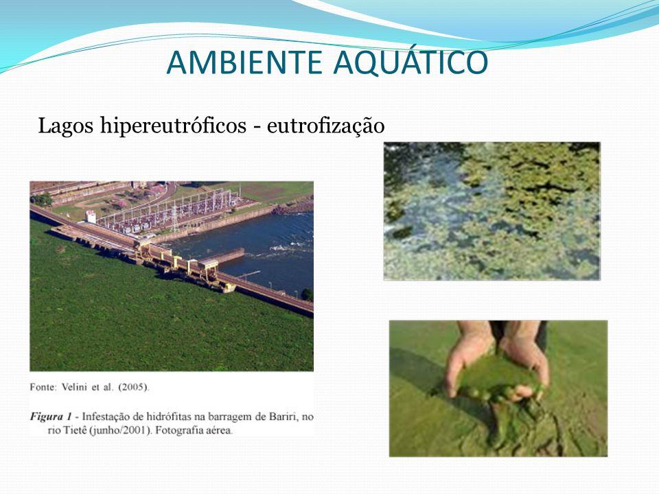 AMBIENTE AQUÁTICO Lagos hipereutróficos - eutrofização