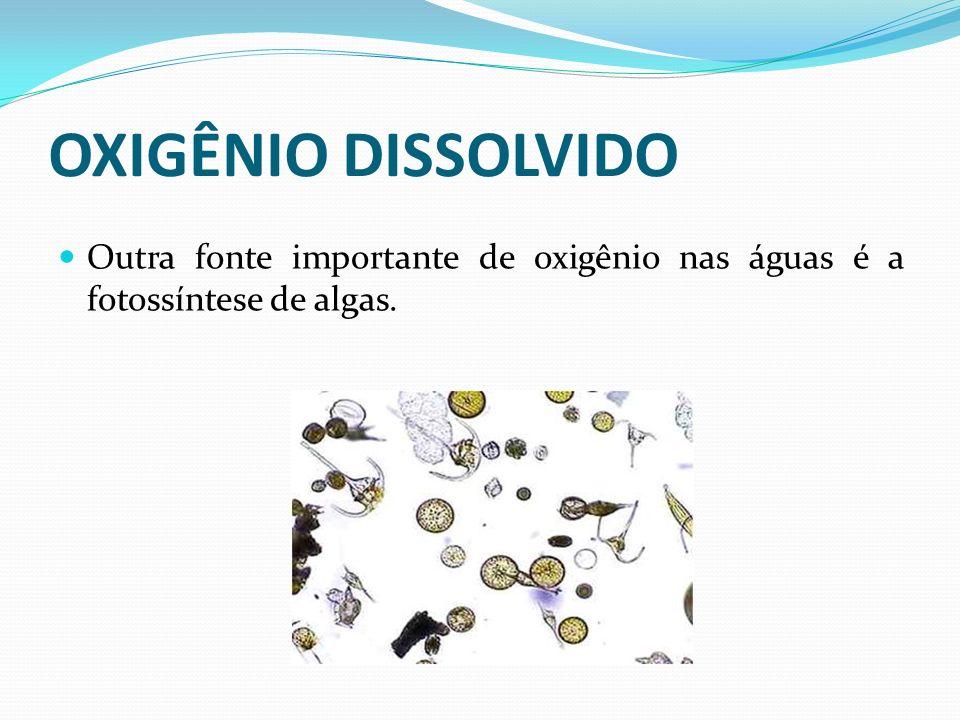 OXIGÊNIO DISSOLVIDO Outra fonte importante de oxigênio nas águas é a fotossíntese de algas.