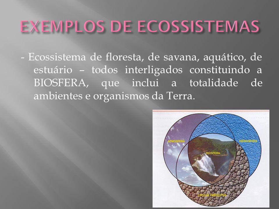 - Ecossistema de floresta, de savana, aquático, de estuário – todos interligados constituindo a BIOSFERA, que inclui a totalidade de ambientes e organ