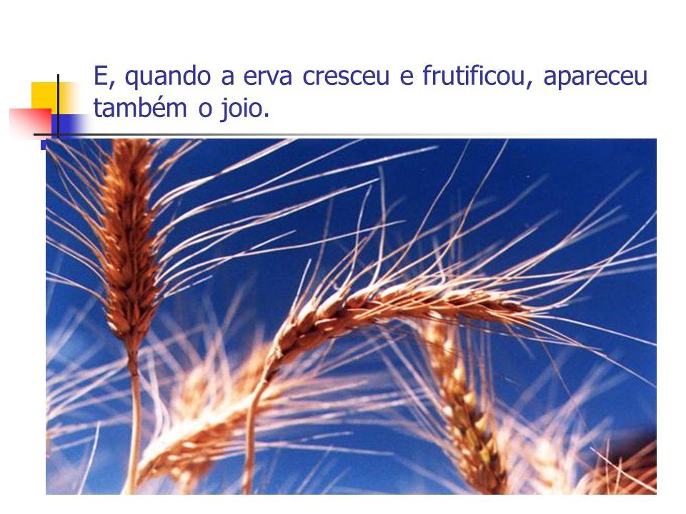 E, quando a erva cresceu e frutificou, apareceu também o joio.
