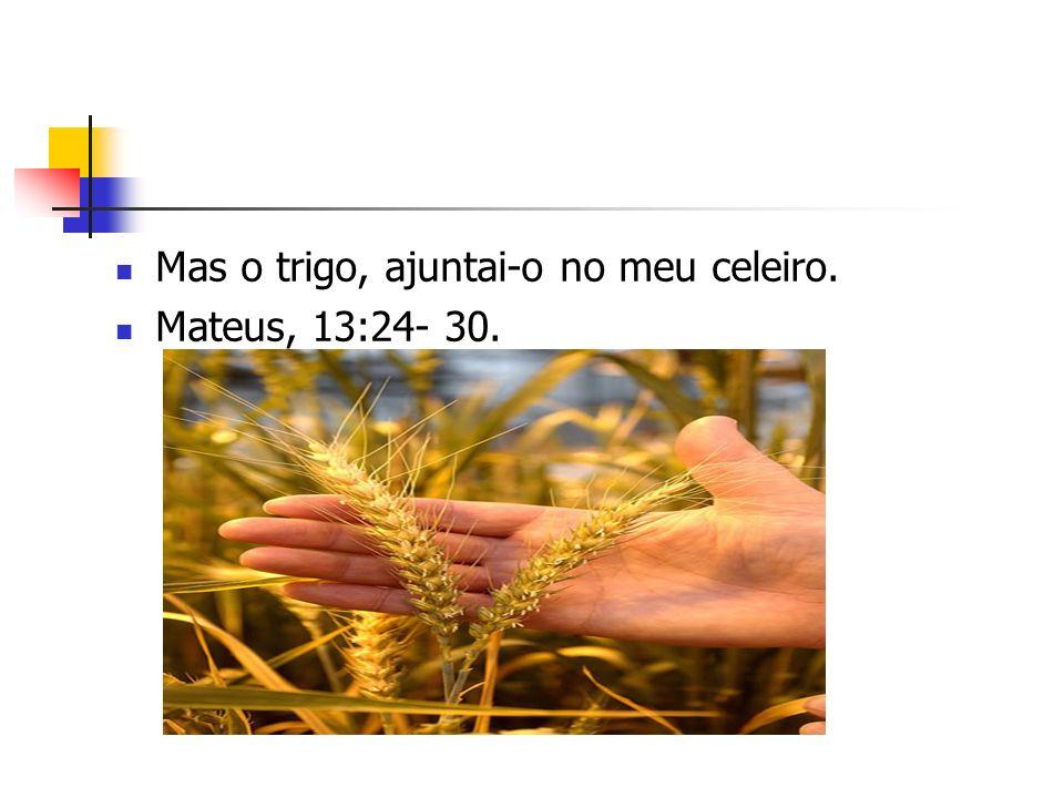 Mas o trigo, ajuntai-o no meu celeiro. Mateus, 13:24- 30.
