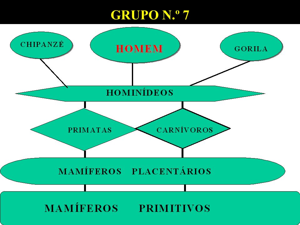 GRUPO N.º 7