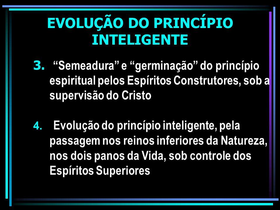 EVOLUÇÃO DO PRINCÍPIO INTELIGENTE 3.Semeadura e germinação do princípio espiritual pelos Espíritos Construtores, sob a supervisão do Cristo 4. Evoluçã