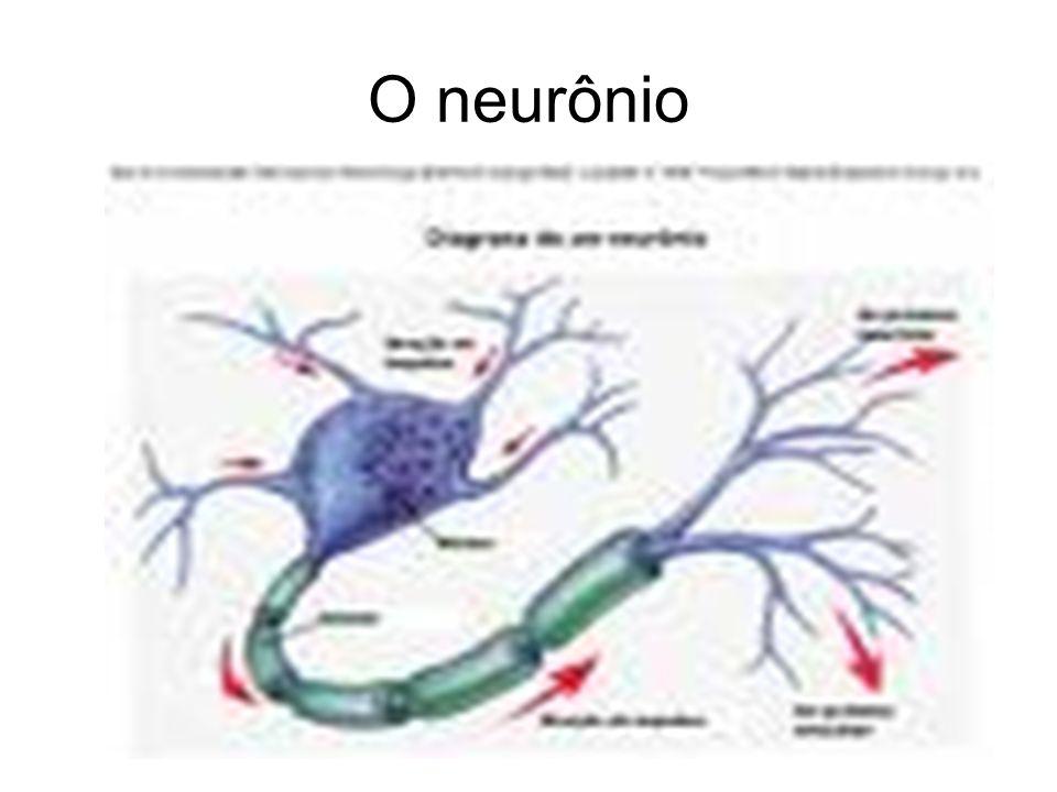 45 O sistema nervoso