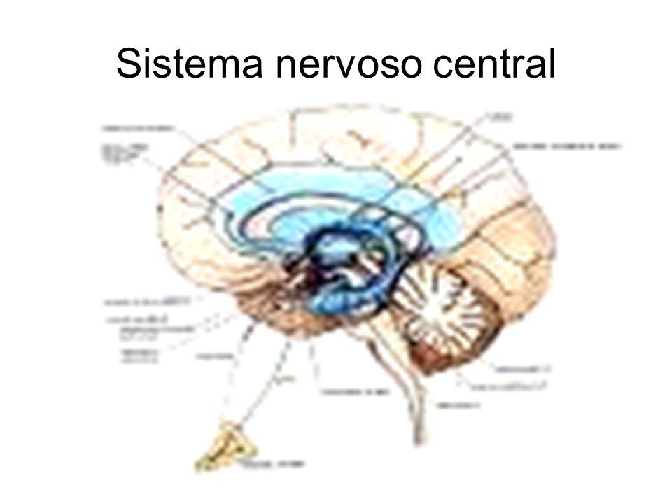 46 O neurônio