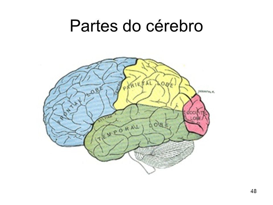 47 Sistema nervoso central