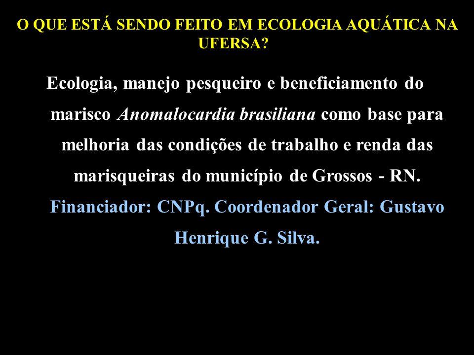 O QUE ESTÁ SENDO FEITO EM ECOLOGIA AQUÁTICA NA UFERSA?? Ecologia, manejo pesqueiro e beneficiamento do marisco Anomalocardia brasiliana como base para