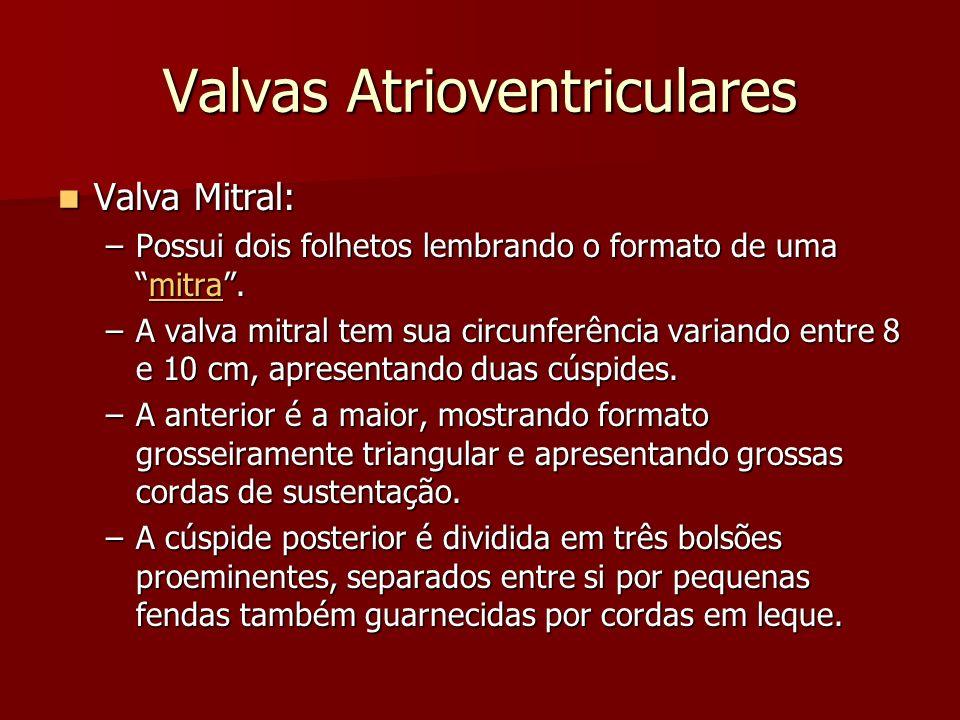 Valvas Atrioventriculares Valva Mitral: Valva Mitral: –Possui dois folhetos lembrando o formato de umamitra. mitra –A valva mitral tem sua circunferên