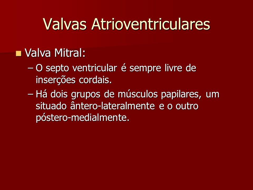 Valvas Atrioventriculares Valva Mitral: Valva Mitral: –O septo ventricular é sempre livre de inserções cordais. –Há dois grupos de músculos papilares,