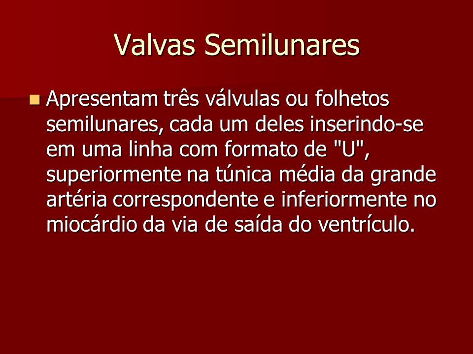 Valvas Semilunares O conceito de anel das valvas arteriais fica comprometido, pois não existe uma linha circular contínua de inserção valvular, como ocorre com as valvas atrioventriculares.