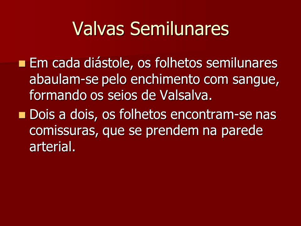 Valvas Semilunares Valva Pulmonar Valva Pulmonar –Os folhetos da valva do tronco pulmonar recebem nomes de acordo com sua distribuição topográfica.