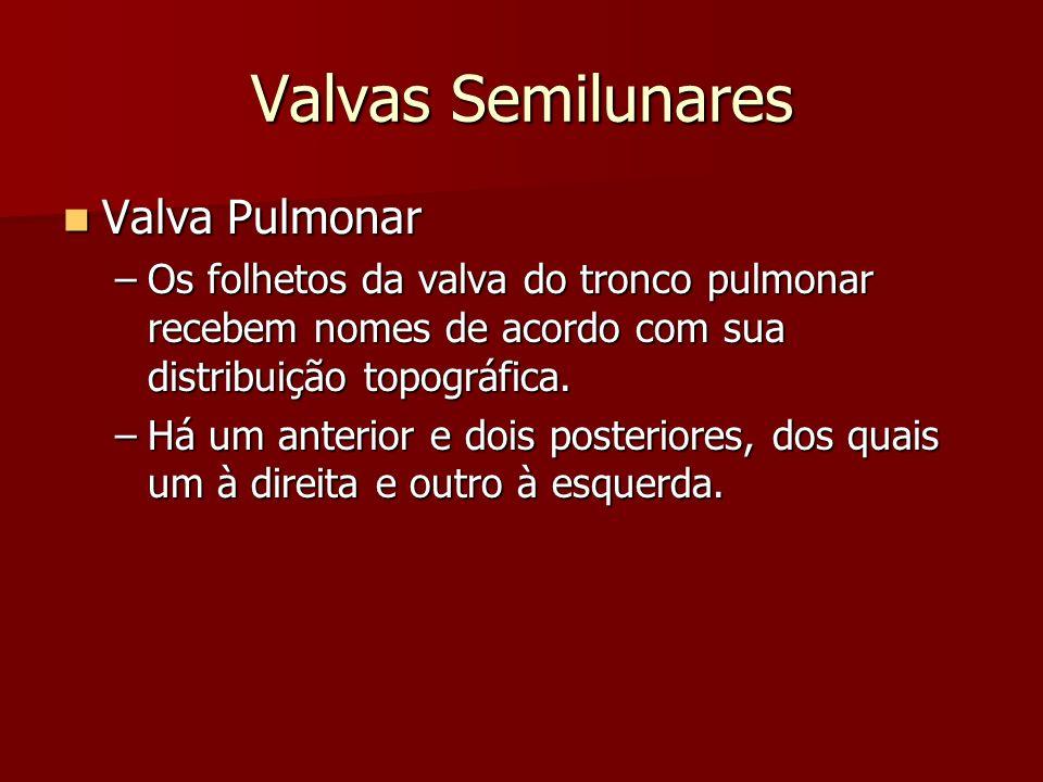 Valvas Semilunares Valva Pulmonar Valva Pulmonar –Os folhetos da valva do tronco pulmonar recebem nomes de acordo com sua distribuição topográfica. –H