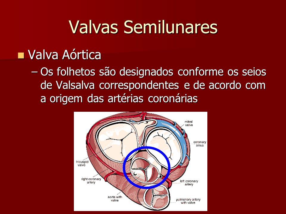 Valvas Semilunares Valva Aórtica Valva Aórtica –Os folhetos são designados conforme os seios de Valsalva correspondentes e de acordo com a origem das