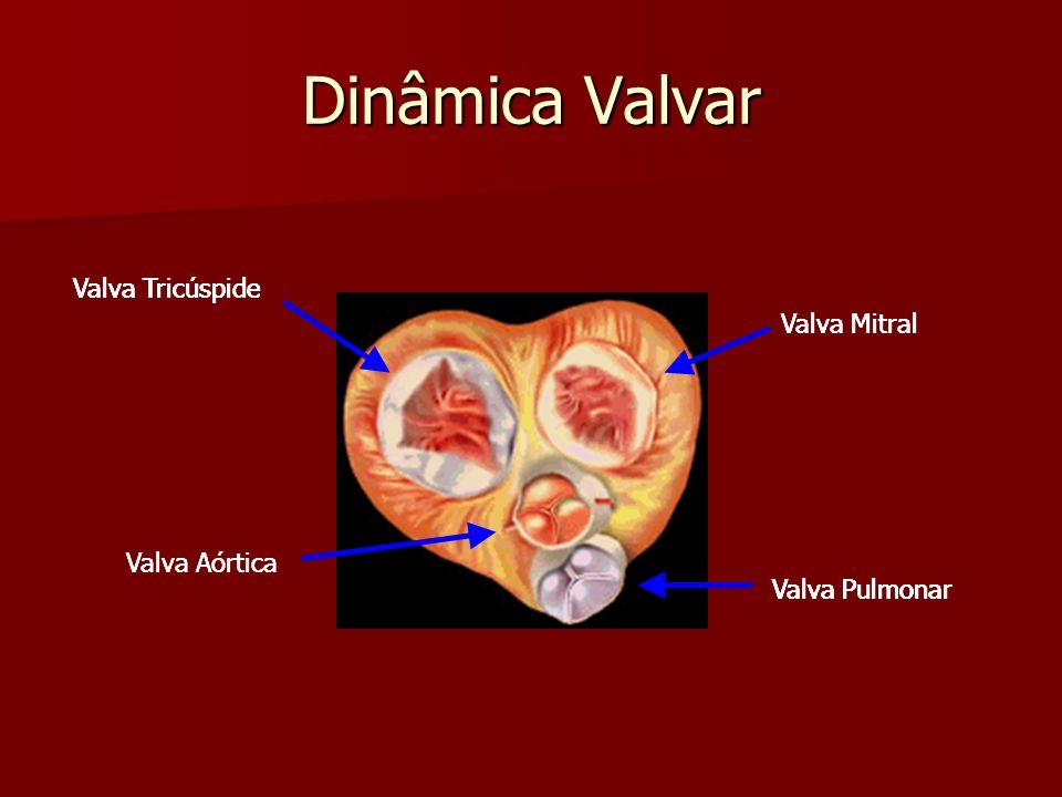 Dinâmica Valvar Sístole Ventricular Sístole Ventricular