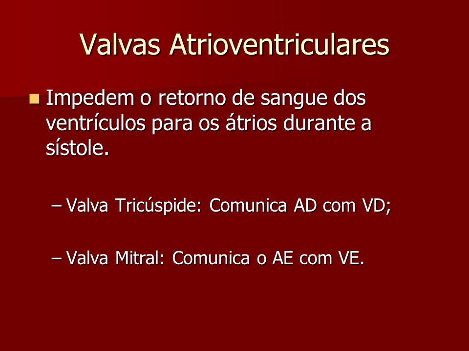 Valvas Atrioventriculares Impedem o retorno de sangue dos ventrículos para os átrios durante a sístole. Impedem o retorno de sangue dos ventrículos pa