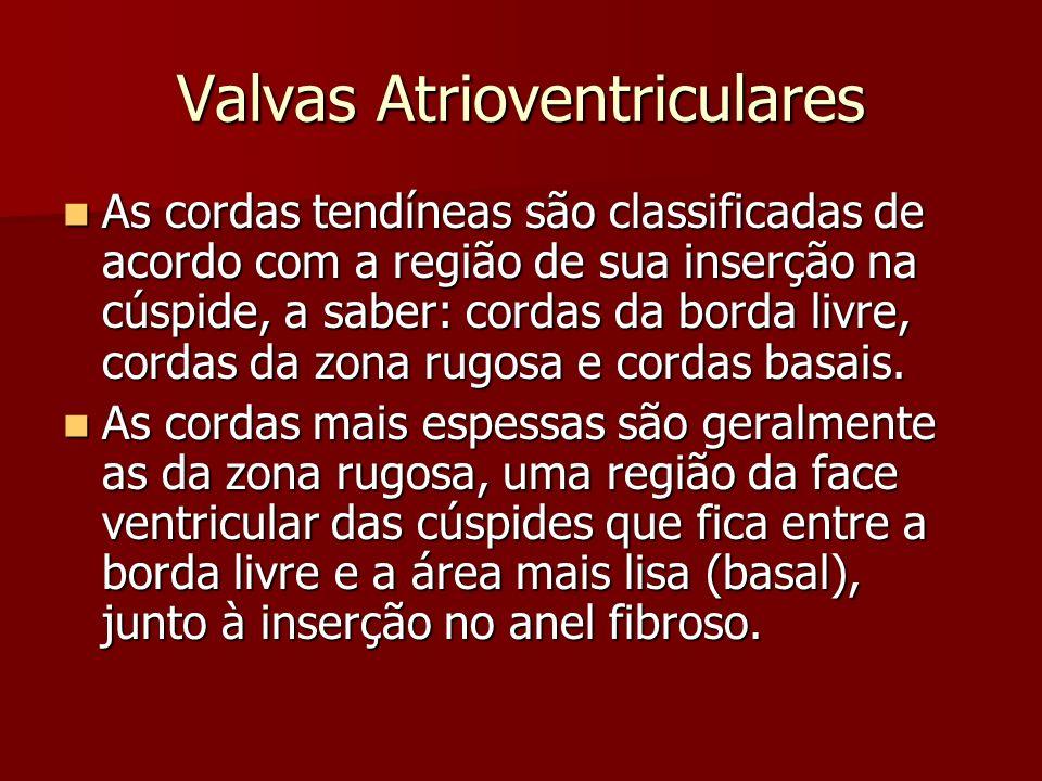 Valvas Atrioventriculares Valva Tricúspide: Valva Tricúspide: –O perímetro da valva tricúspide varia normalmente de 10 a 12 cm.
