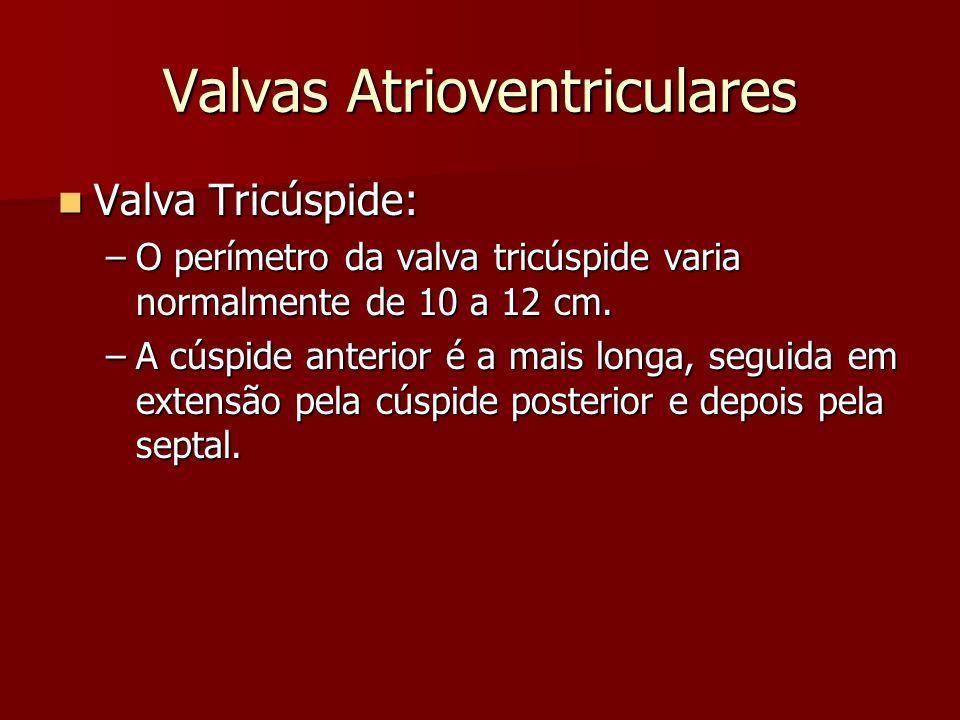 Valvas Atrioventriculares Valva Mitral: Valva Mitral: –Possui dois folhetos lembrando o formato de umamitra.