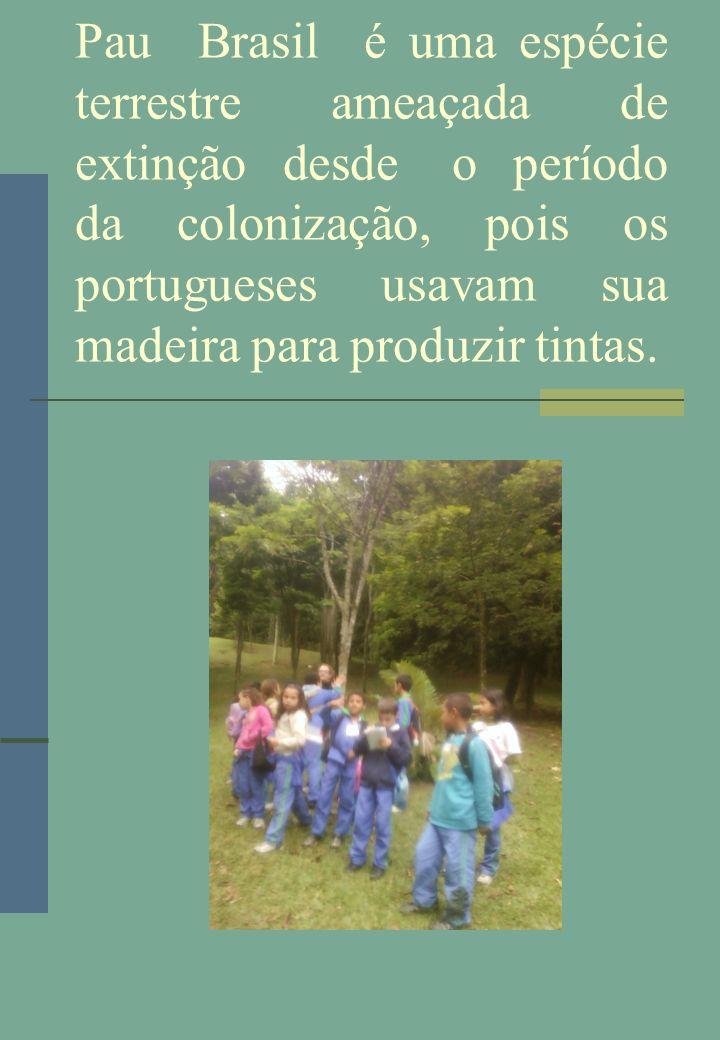 Pau Brasil é uma espécie terrestre ameaçada de extinção desde o período da colonização, pois os portugueses usavam sua madeira para produzir tintas.