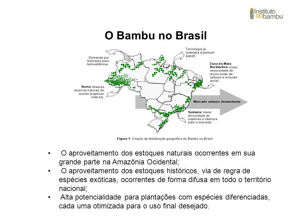 O Bambu no Brasil O aproveitamento dos estoques naturais ocorrentes em sua grande parte na Amazônia Ocidental; O aproveitamento dos estoques histórico