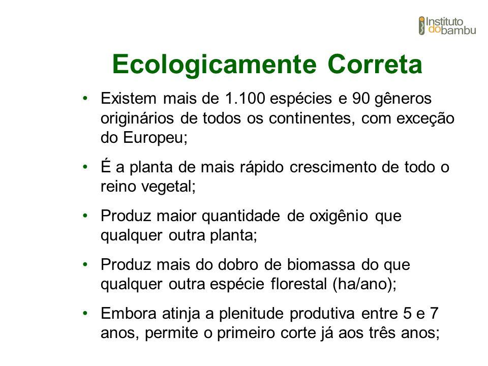 Ecologicamente Correta Existem mais de 1.100 espécies e 90 gêneros originários de todos os continentes, com exceção do Europeu; É a planta de mais ráp