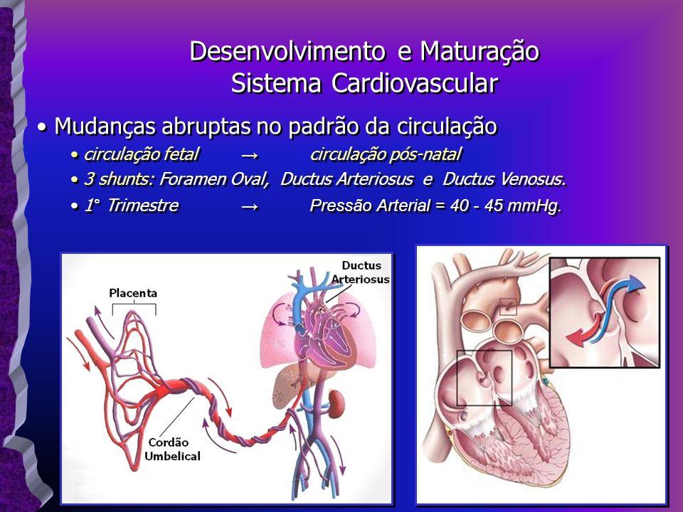 Mudanças abruptas no padrão da circulação circulação fetal circulação pós-natal 3 shunts: Foramen Oval, Ductus Arteriosus e Ductus Venosus. 1° Trimest