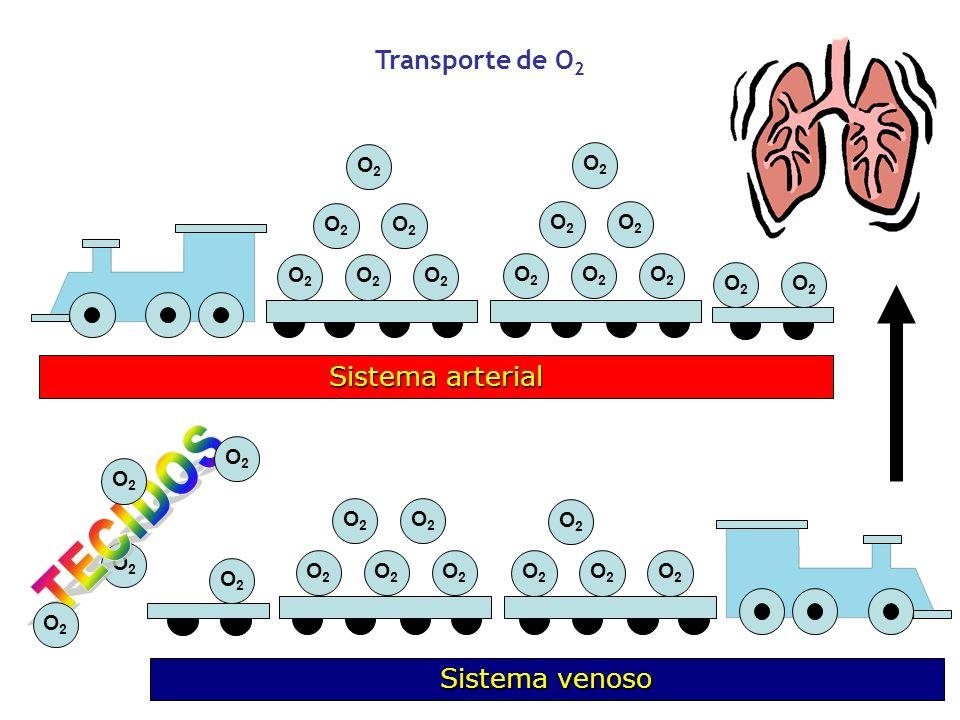 O2O2 O2O2 O2O2 O2O2 O2O2 O2O2 O2O2 O2O2 O2O2 O2O2 O2O2 O2O2 O2O2 O2O2 O2O2 Sistema arterial Transporte de O 2 O2O2 O2O2 O2O2 O2O2 O2O2 O2O2 O2O2 O2O2