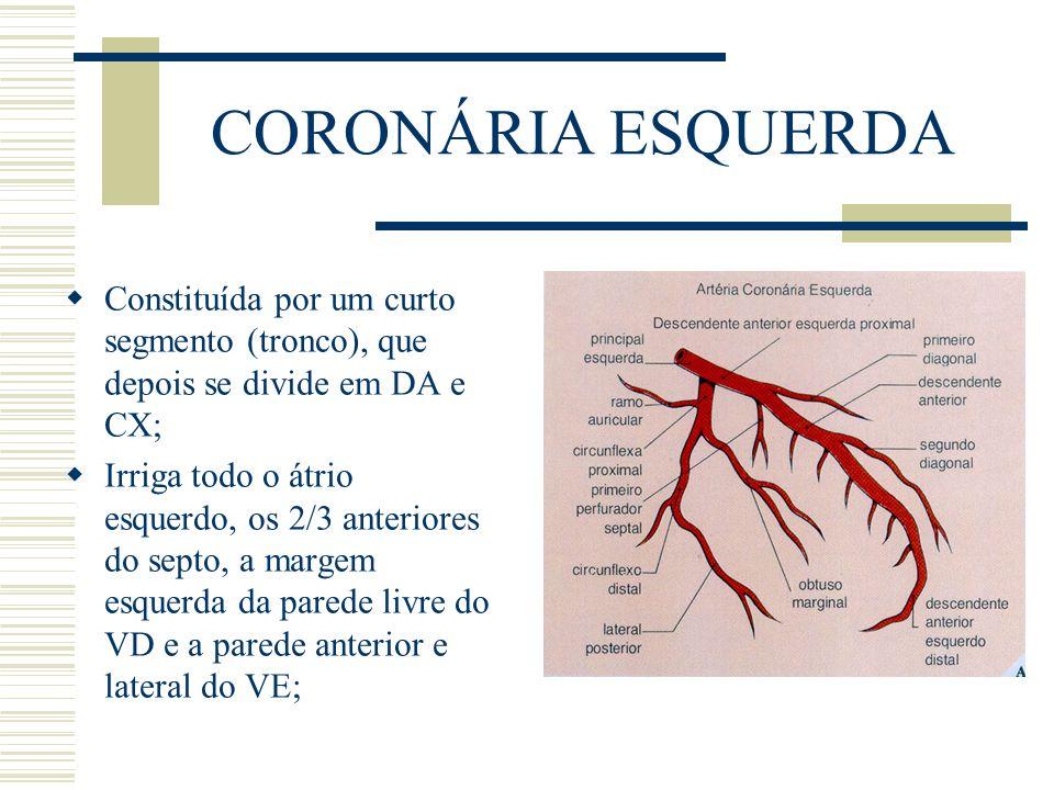 CORONÁRIA ESQUERDA Constituída por um curto segmento (tronco), que depois se divide em DA e CX; Irriga todo o átrio esquerdo, os 2/3 anteriores do sep