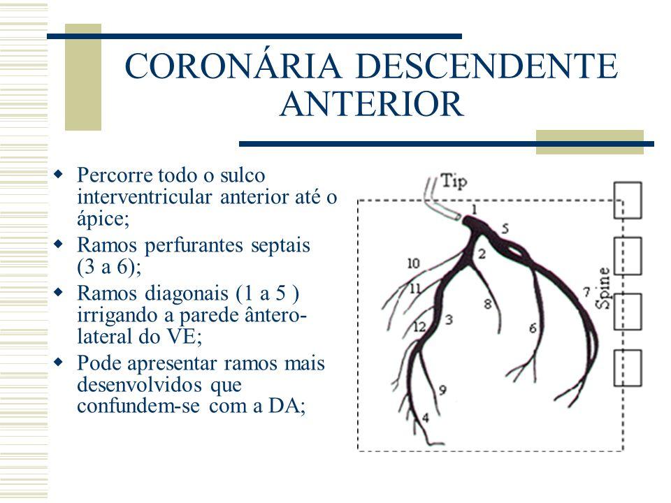 CORONÁRIA DESCENDENTE ANTERIOR Percorre todo o sulco interventricular anterior até o ápice; Ramos perfurantes septais (3 a 6); Ramos diagonais (1 a 5