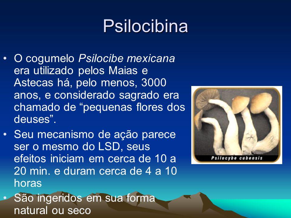 Psilocibina O cogumelo Psilocibe mexicana era utilizado pelos Maias e Astecas há, pelo menos, 3000 anos, e considerado sagrado era chamado de pequenas