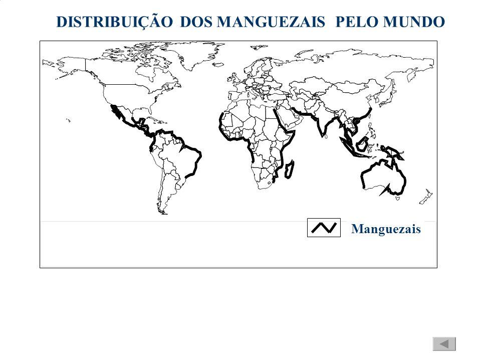 DISTRIBUIÇÃO DOS MANGUEZAIS PELO MUNDO Manguezais